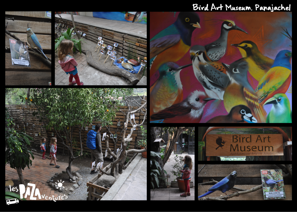 3b bird art museum pana