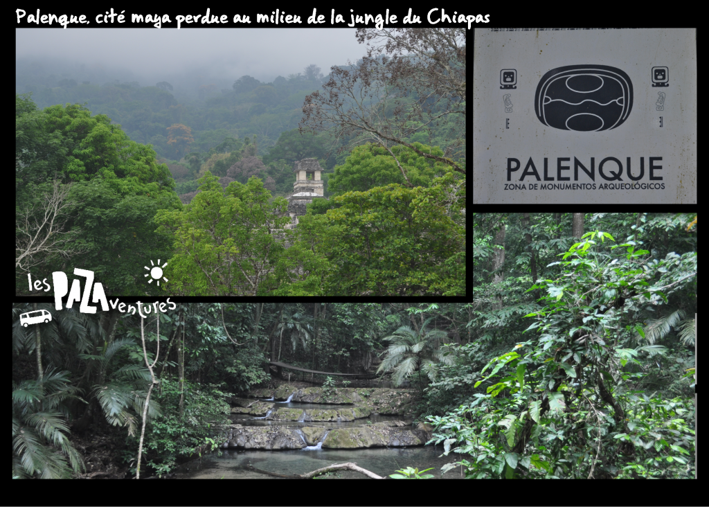 5 palenque jungle